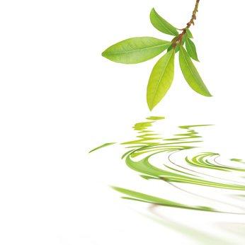 Recuperar la salud en forma natural con la Naturopatía