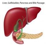 Consejos para Mantener Sano Nuestro Hígado