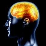 Funcionamiento de la Memoria: Quñe Hacer para que Mejore