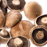 Micoterapia, los hongos también nos ayudan a sanar