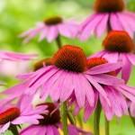 Plantas Depurativas que nos limpian por dentro