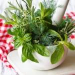 Las Plantas Medicinales y cómo nos ayudan a Mantener la Salud